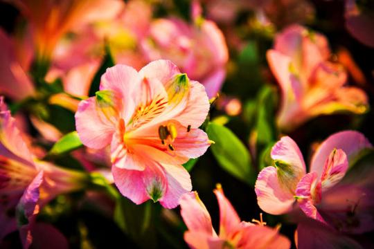 Pequena Flor Colorida
