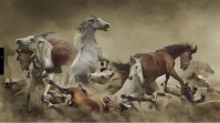Koen Demuynck, In the Dust