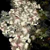 Yedda Morrison, Swarm, Bioposy Series