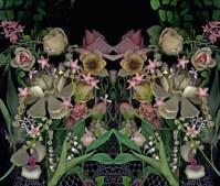 Yedda Morrison, Pink Mimicry, Bioposy Series