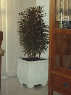 Arália castanheira na decoração