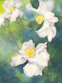 Camilla Blossoms