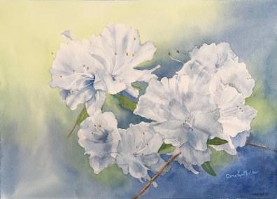 White Azalea's