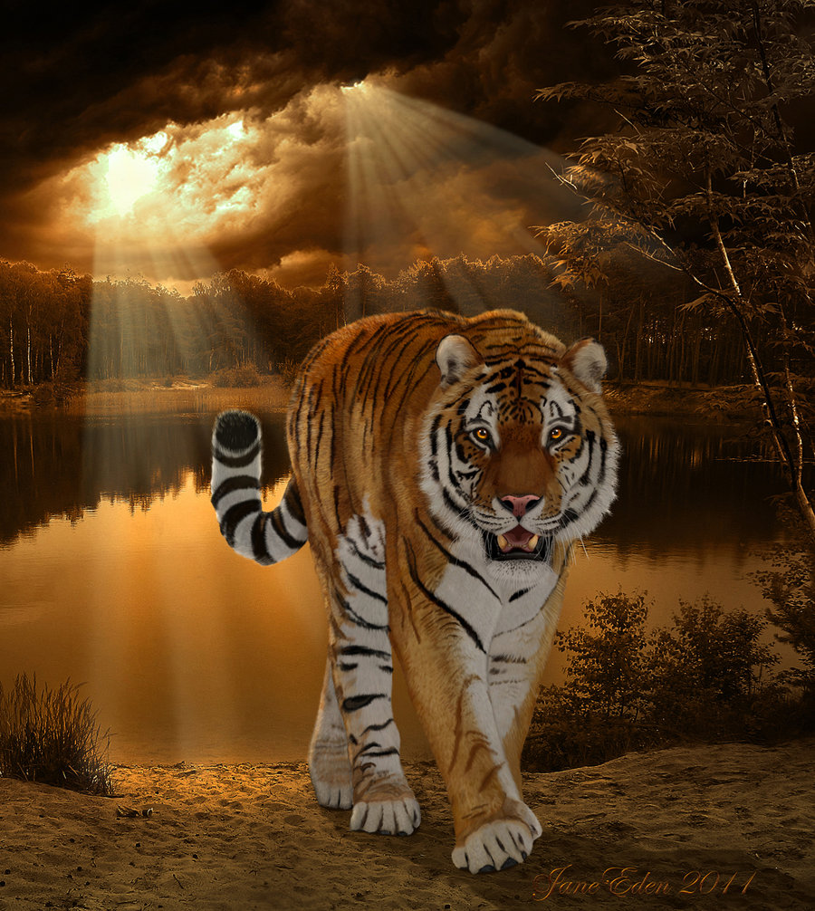 tiger - king of his world art - id: 40697 - art abyss