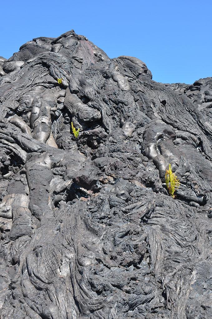 Lava fields in Hawaii - photo by Glenn McClure