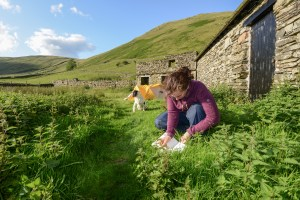 Harriet working from her camp area in High Borrowdale, where she worked for the summer in 2015 at Poet in the Meadow for Friends of the Lake District copy