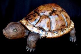 """Turtle - approx. 9""""H x 14""""W x 20""""L"""