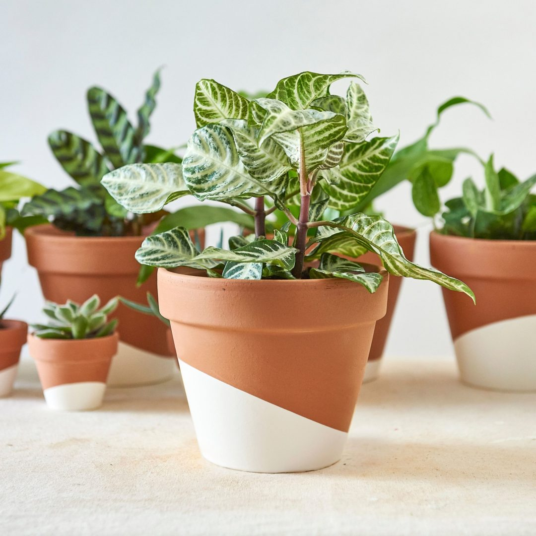 Top Plant Delivery | Artful Living Magazine