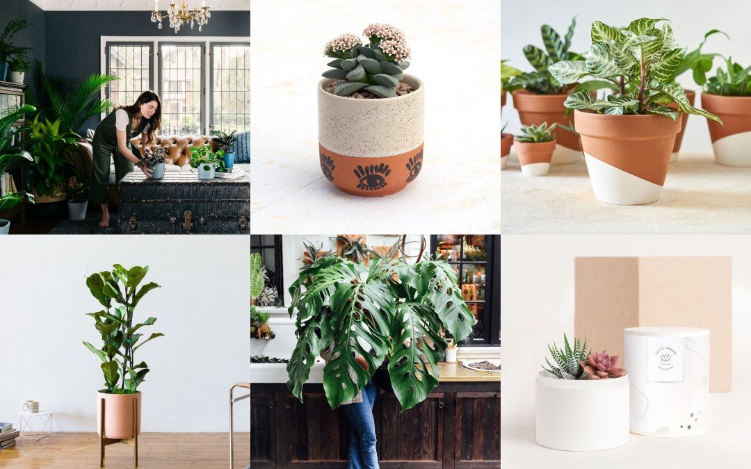The Top 10 Plant Delivery Brands to Shop