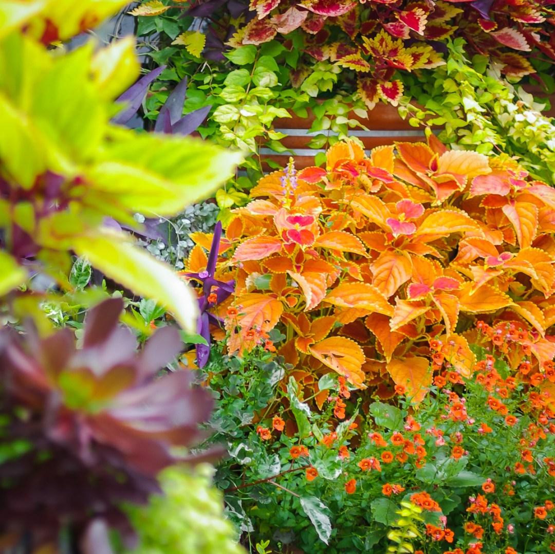 Tangletown Gardens   Artful Living Magazine