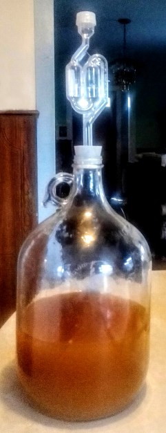 Dandelion Wine in a Carboy