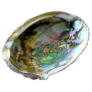 Abalone Sea Shell