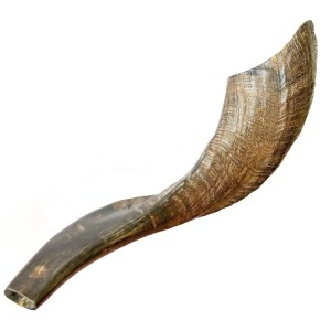 Classical Ram's Horn Shofar – Natural Brown