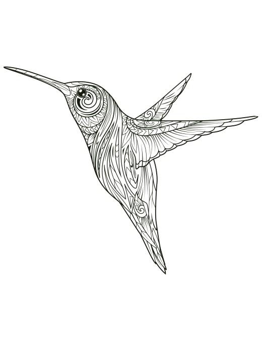 coloriage de colibri à imprimer gratuit
