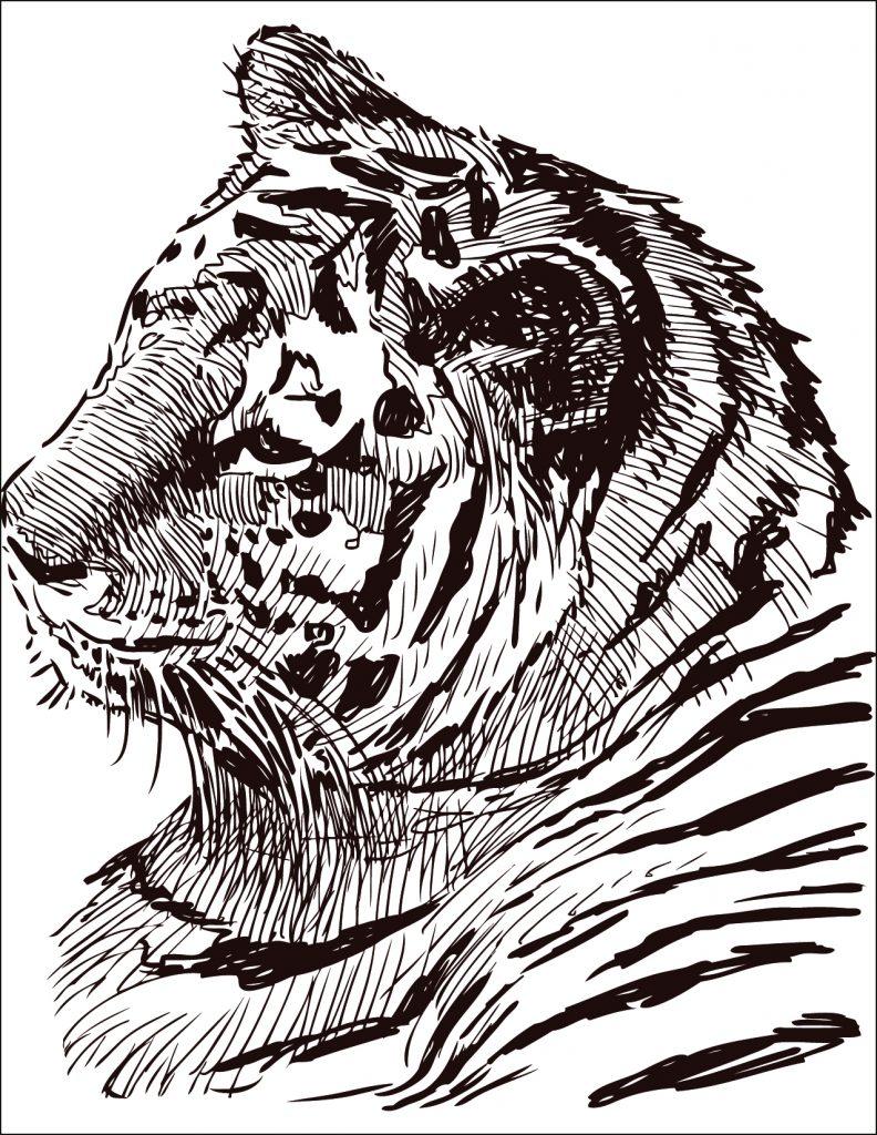 Coloriage Bebe Felin.Dessin A Colorier Gratuit Felin Tigre Artherapie Ca