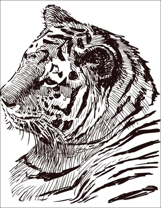 dessin à colorier gratuit félin tigre