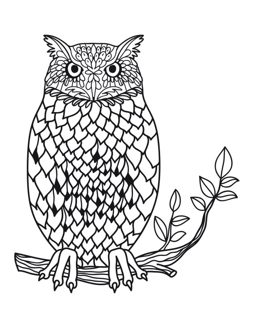 coloriage pour adulte hiboux harry potter