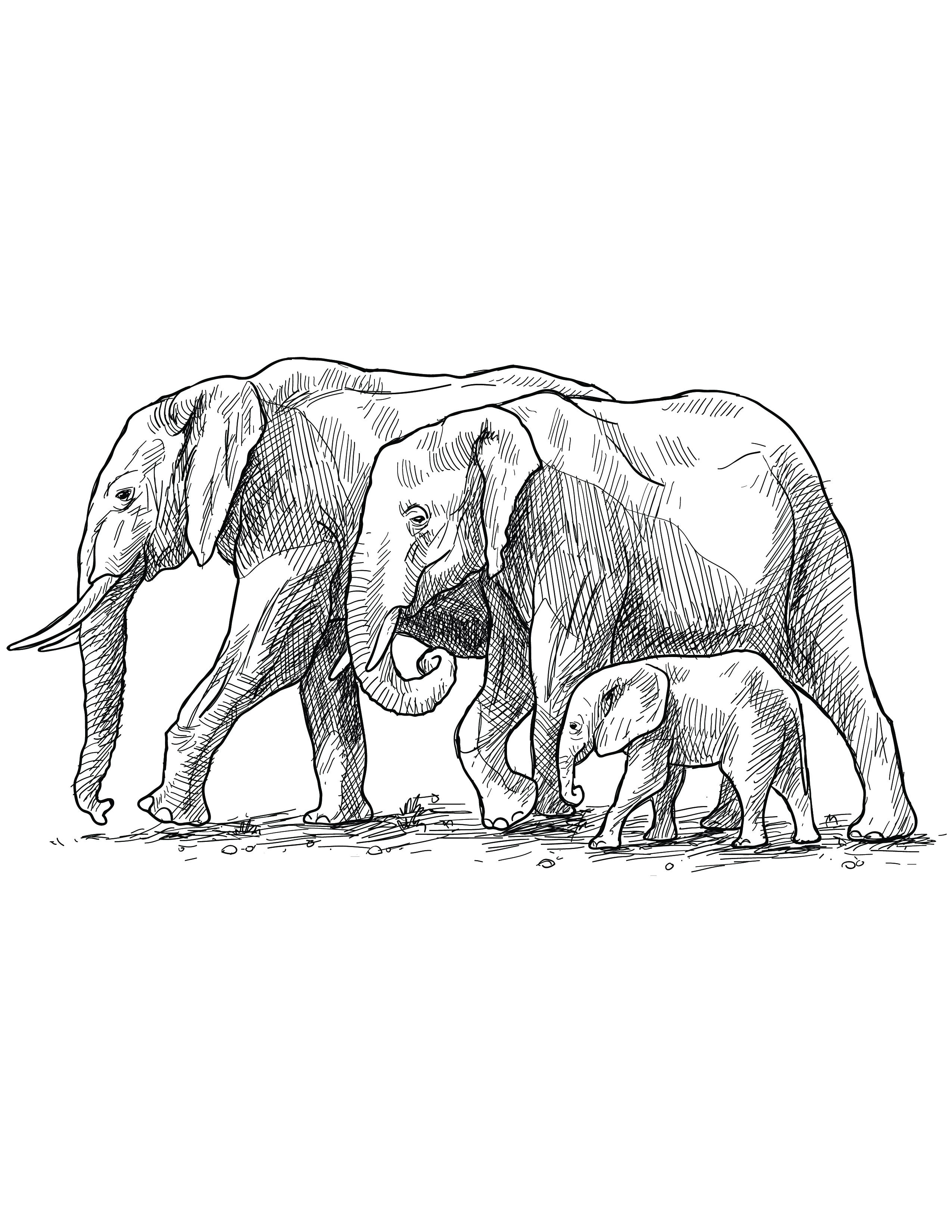 Coloriage Poisson Elephant.Coloriage Grayscale Gratuit Famille Elephant Artherapie Ca