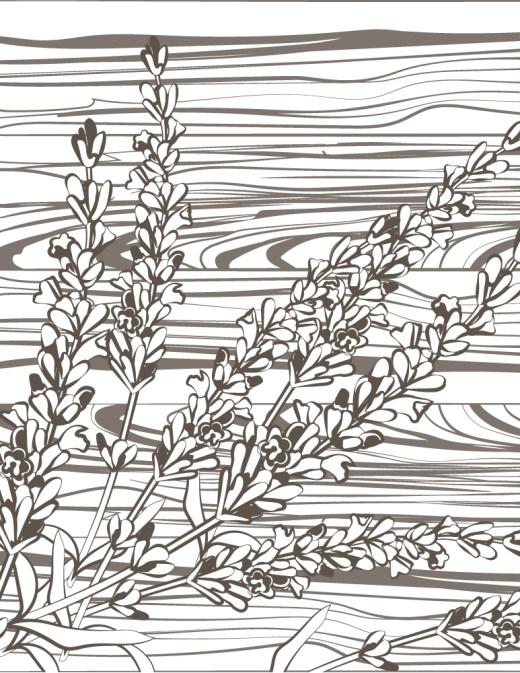 Fleurs séchées automne coloriage pour imprimer