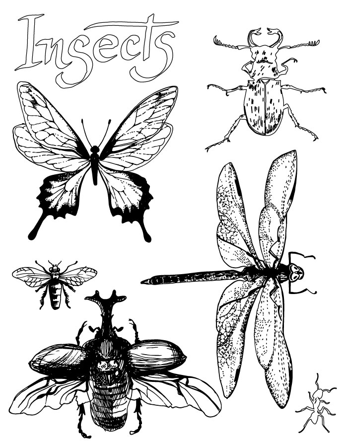 Collection d'insectes coloriage enfant et adulte