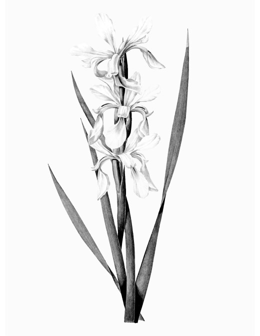Coloriage Fleurs Bulbe.Bulbe Archives Artherapie Ca