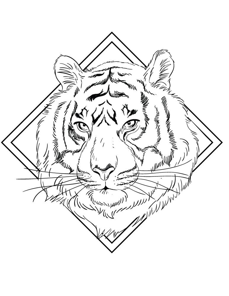 Félin tigre à colorier artherapie pour adulte