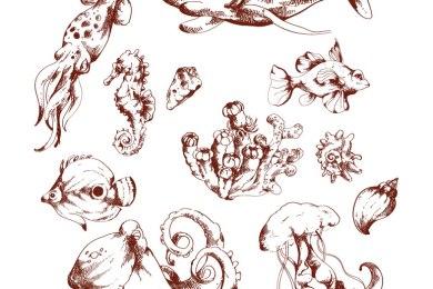 Réalistes créatures de l'océan à dessiner