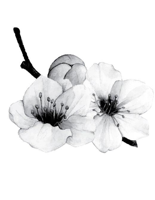 Fleurs de sakura jeux gratuit de coloriage