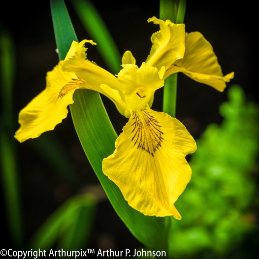 Iris minus focus stacking