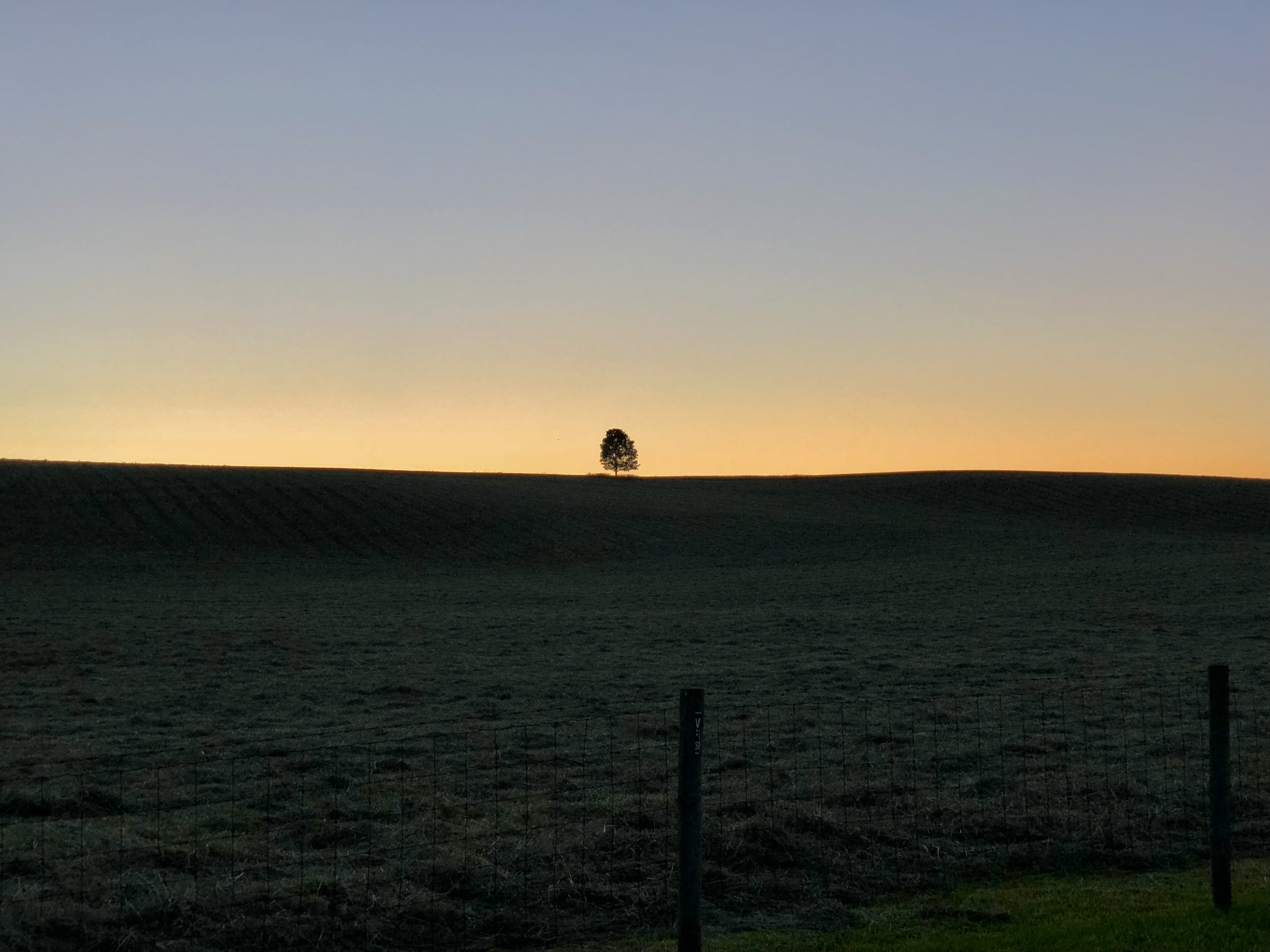 Sunset on Doe Run Ridge, focusing on the lone Sugar Maple.