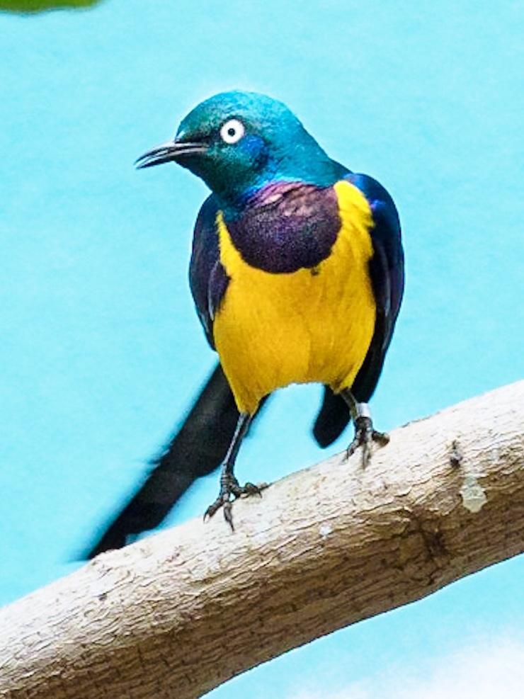 Cyril the Sunbird, #2 of 2