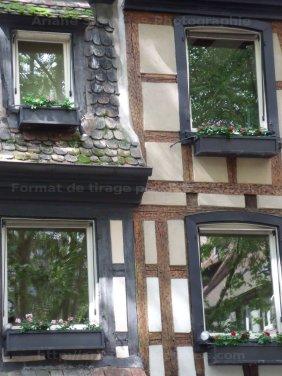 fenêtres feuillues