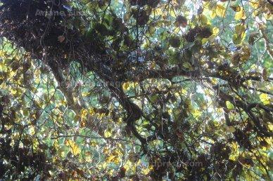 Fouillis d'automnes