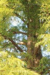 Sequoquoi