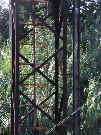 Sur bambous
