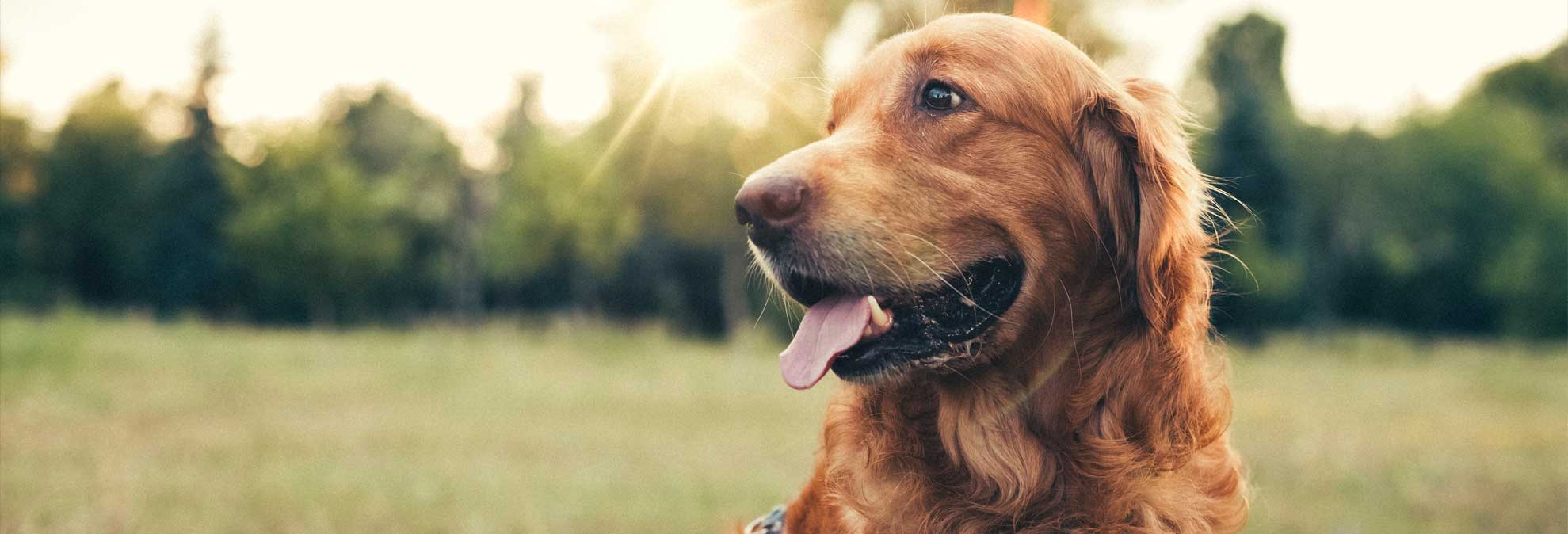 Is Pet Insurance Worth The Cost Consumer Reports