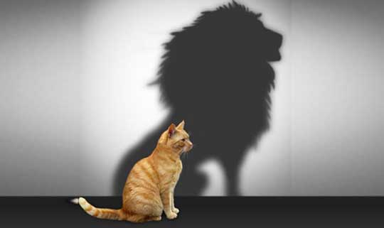 Self-esteem: from kitten to LIONESS! How to nurture positive self ...