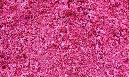 Visuality & Pink Powder