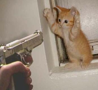 kitten-and-gun