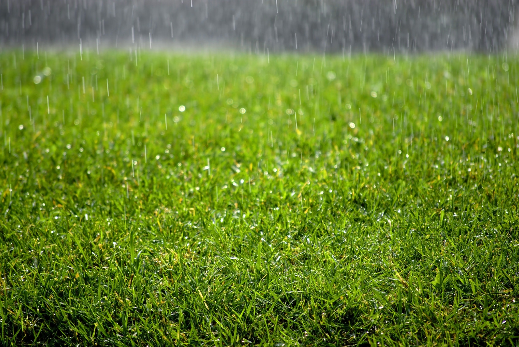 Image result for rain grass