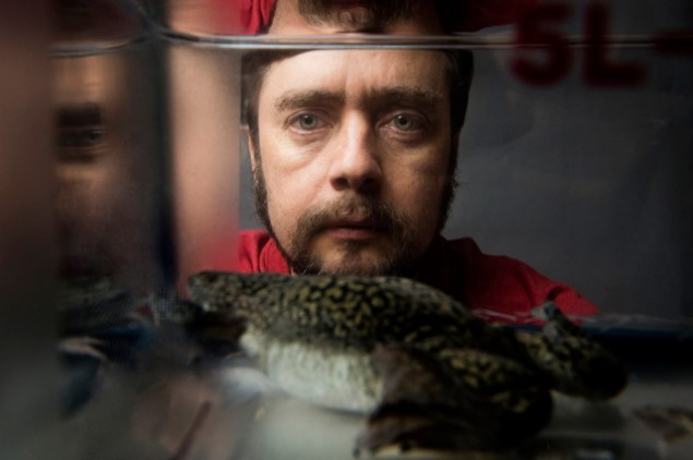 Michael Levin, Tufts University Professor of Biology, looks into a tank containing  clawed frogs.  Photo: Alonso Nichols