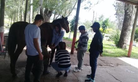 Curso de herradores y cuidadores de caballos en el regimiento