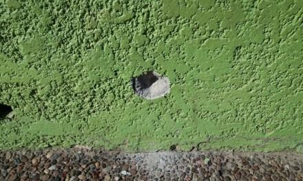 A LOS TIROS:  VECINOS MUESTRAN PREOCUPACIÓN POR HECHOS DE VIOLENCIA