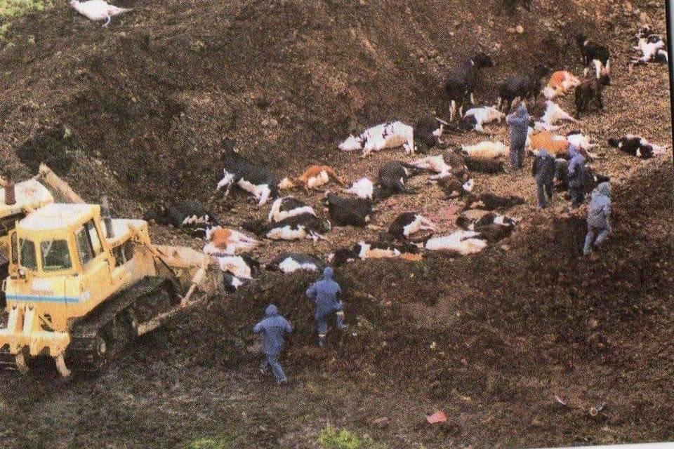 SE CUMPEN 19 AÑOS DEL RIFLE SANITARIO DEL AÑO 2000