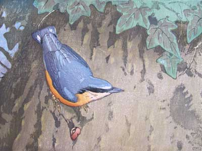 Nuthatch- A Colour Woodblock by Allen W Seaby