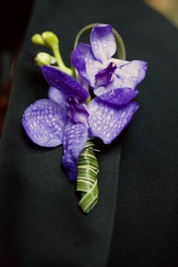 Orchid-Boutonniere-250x375
