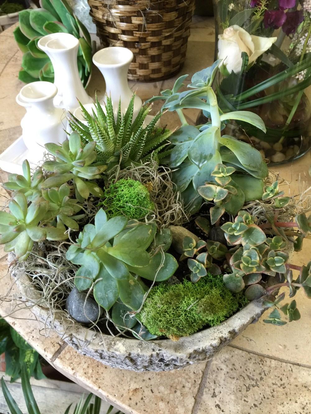 Succulents&moss