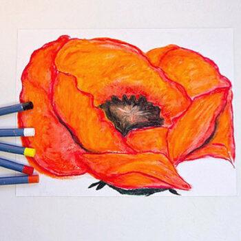 Student version-Red Poppy