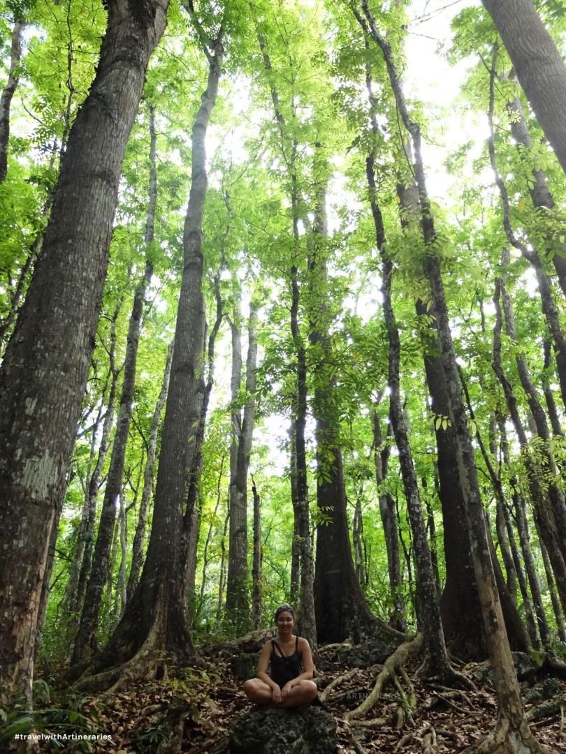 Bohol's man-made forest in Bilar