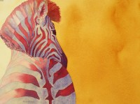 Zebra © Alison Nicholls 2009
